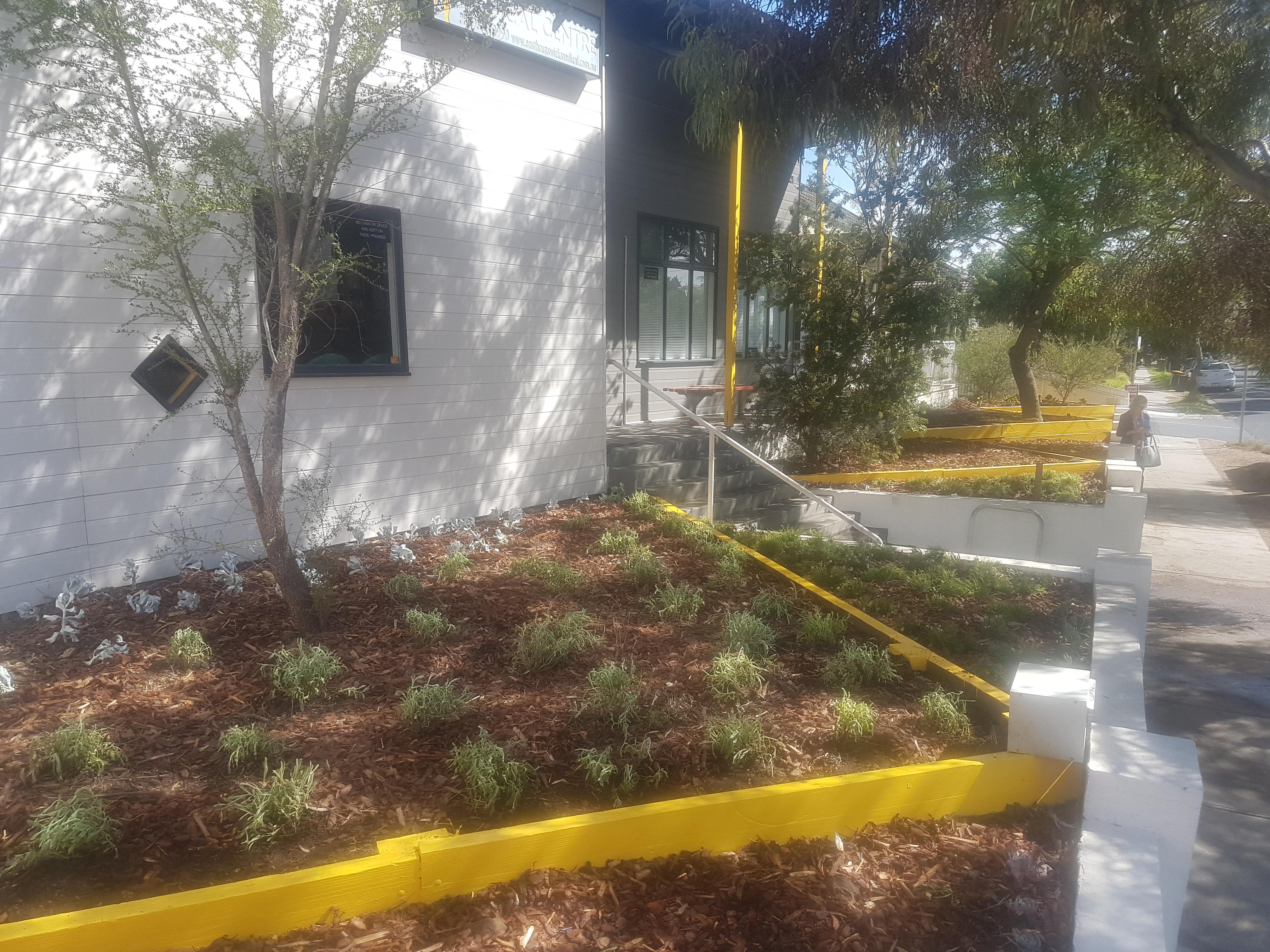 Commercial Garden make over, native plants