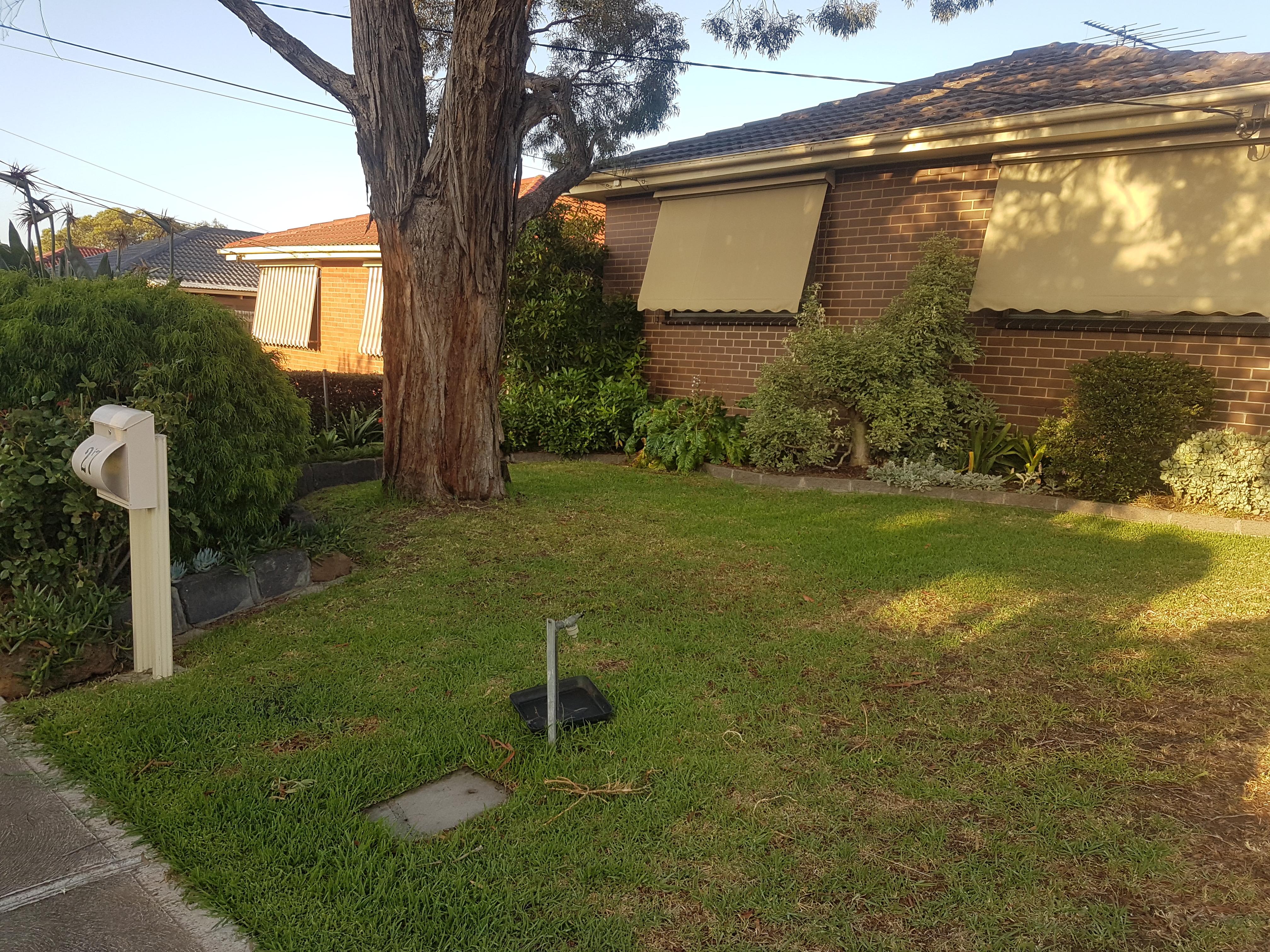 Lawn front garden