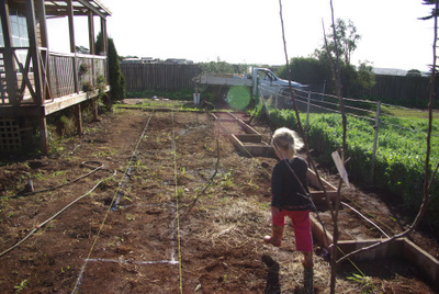 Large Veggie garden, Useable space, good soil, marking out, building a veggie garden
