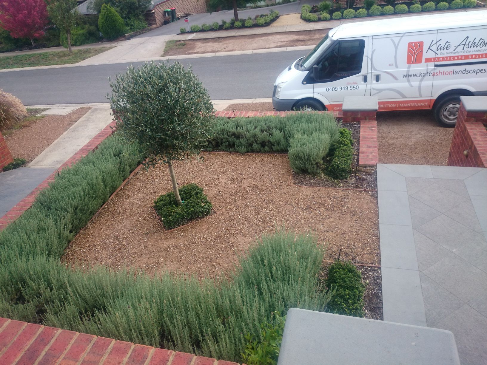 Lavender hedge, Olive tree topiary, ched sandstone surround, Diamond creek front garden