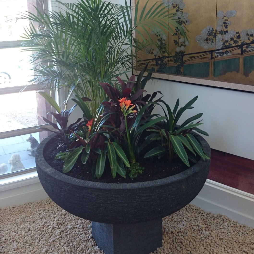 Indoor plants, indoor garden, indoor greenery, pot plants, Golden cane palm