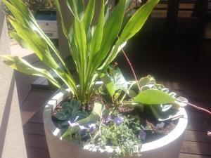 Light weight pots, Plants to suit pot shapes, potted plants, mixed pot plants, plants for pots