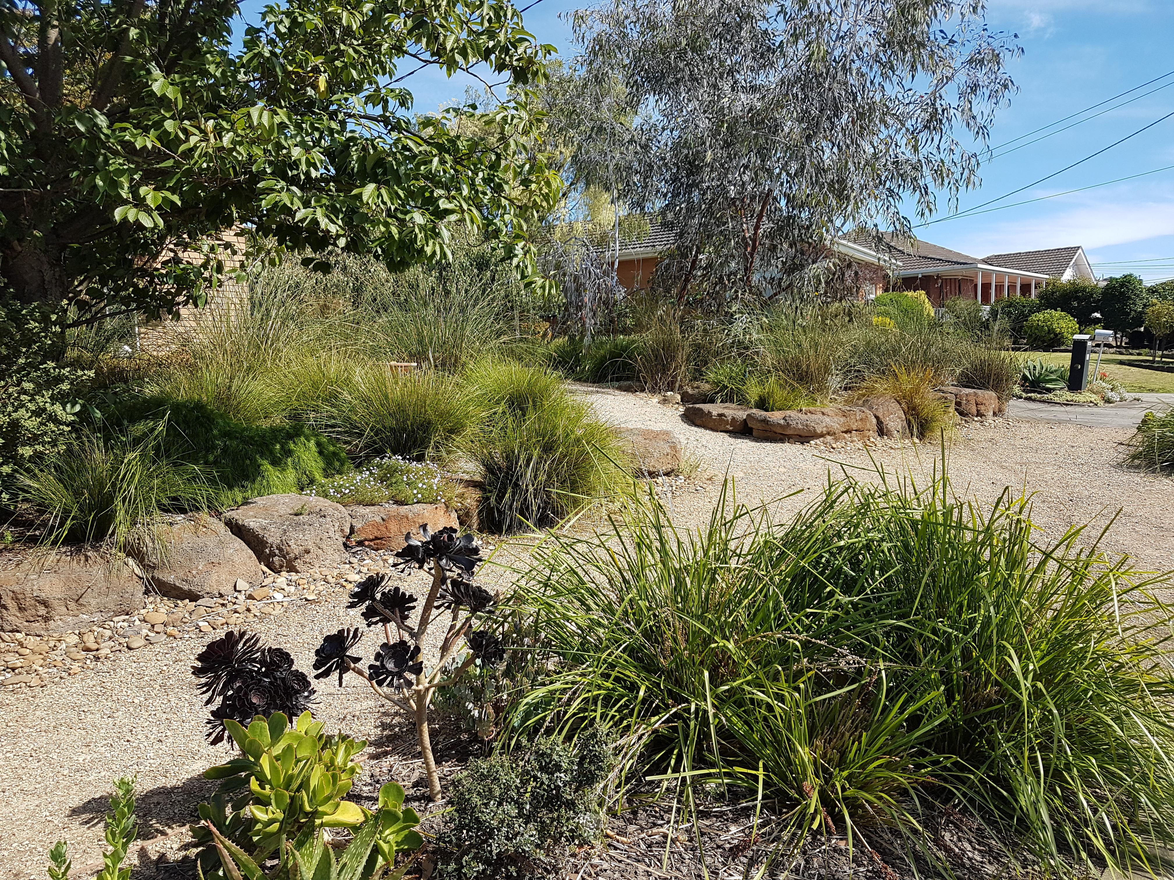 Plant growth, native grasses, drought tolerant garden, garden for birds