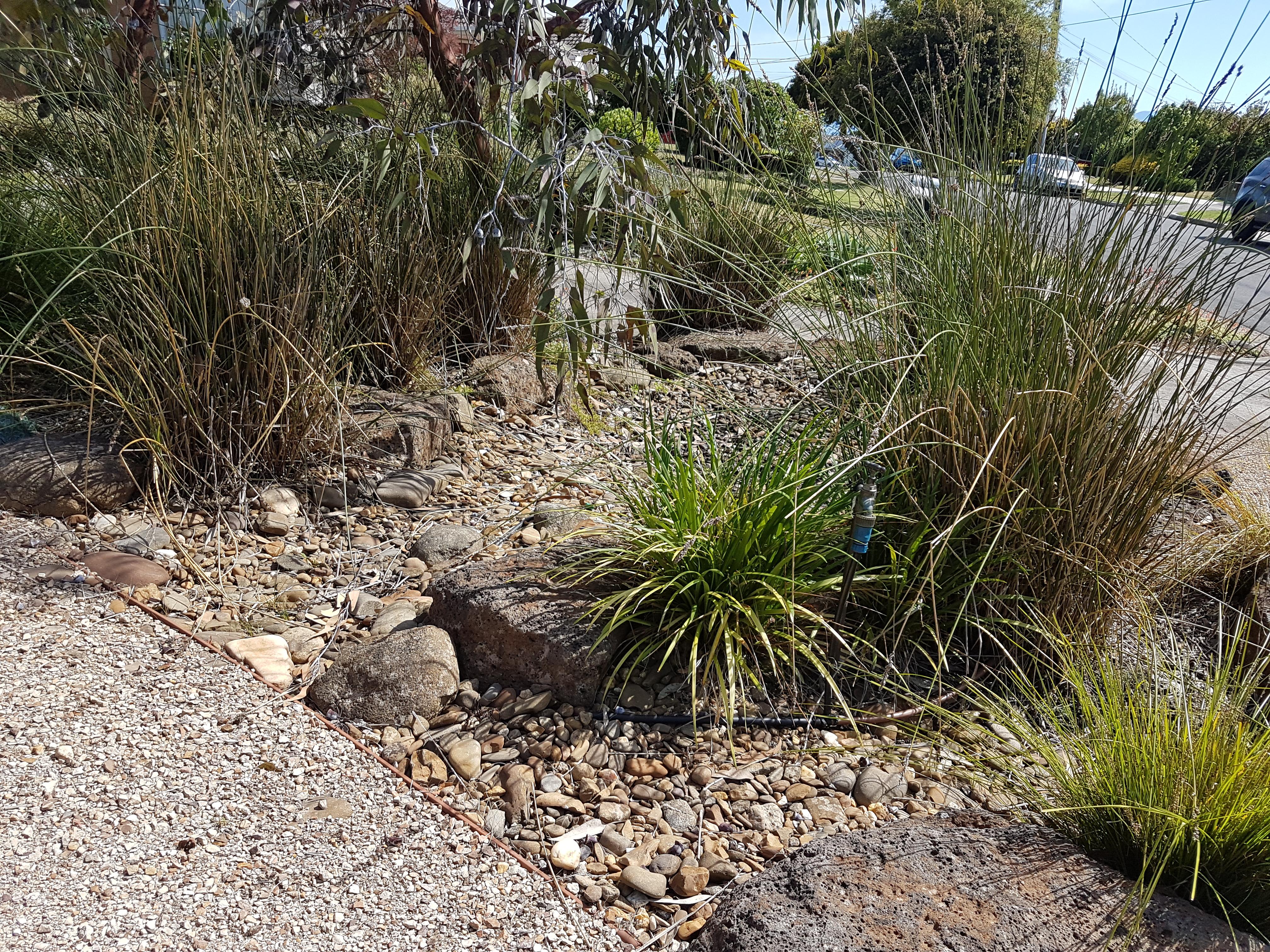 No lawn, native grasses, drought tolerant garden, garden for bird