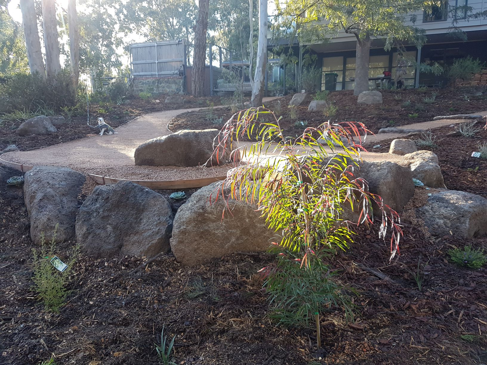 Colac rock for retaining, compacted crushed sandstone, native garden, Templestowe garden, sloping garden, native plants.