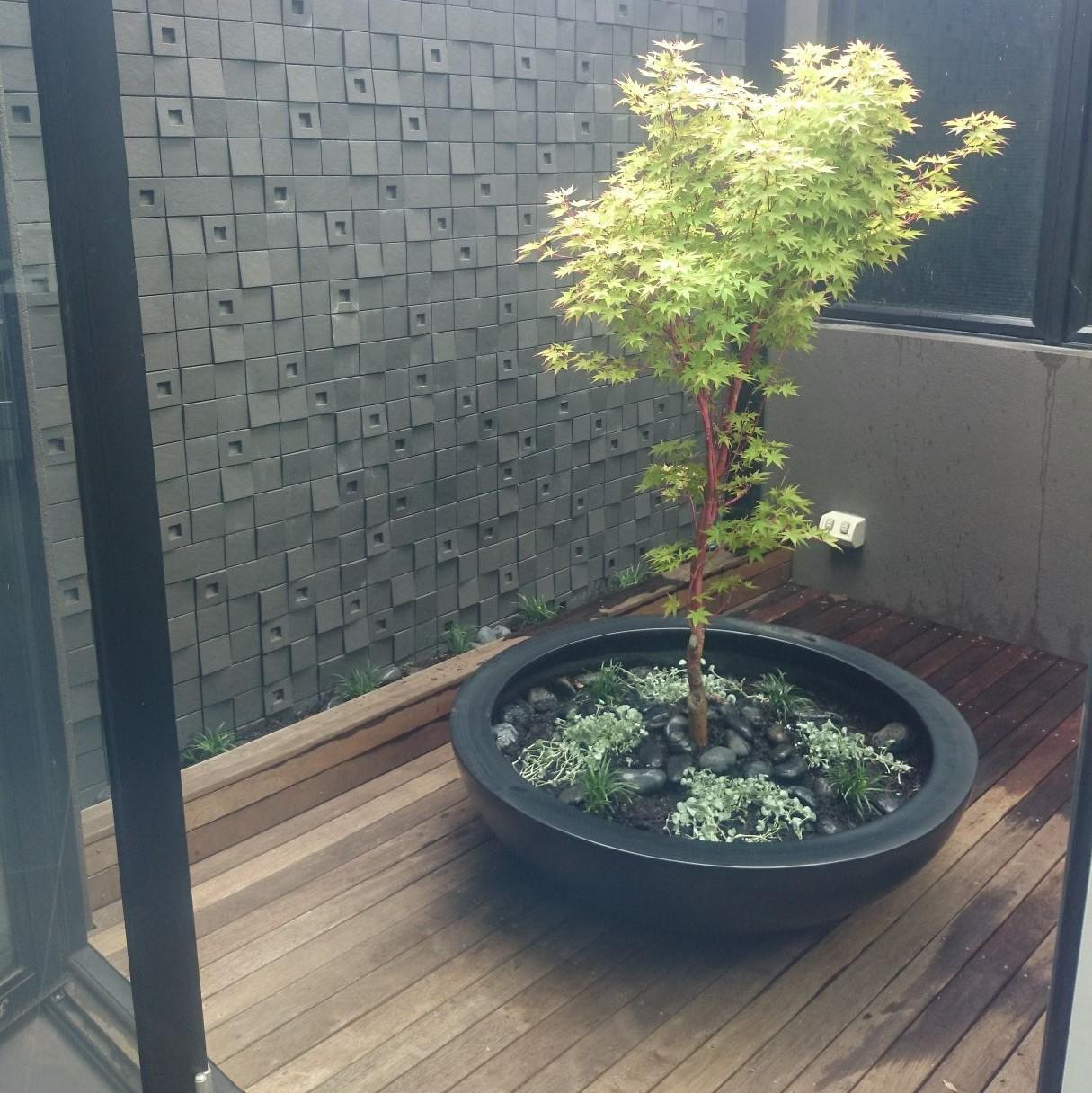 indoor garden, Dicondra silver falls, Dwarf mondo grass, pot plant, Prahan garden, Japanese Maple, Dicondra silver falls, Dwarf mondo grass, pot plants