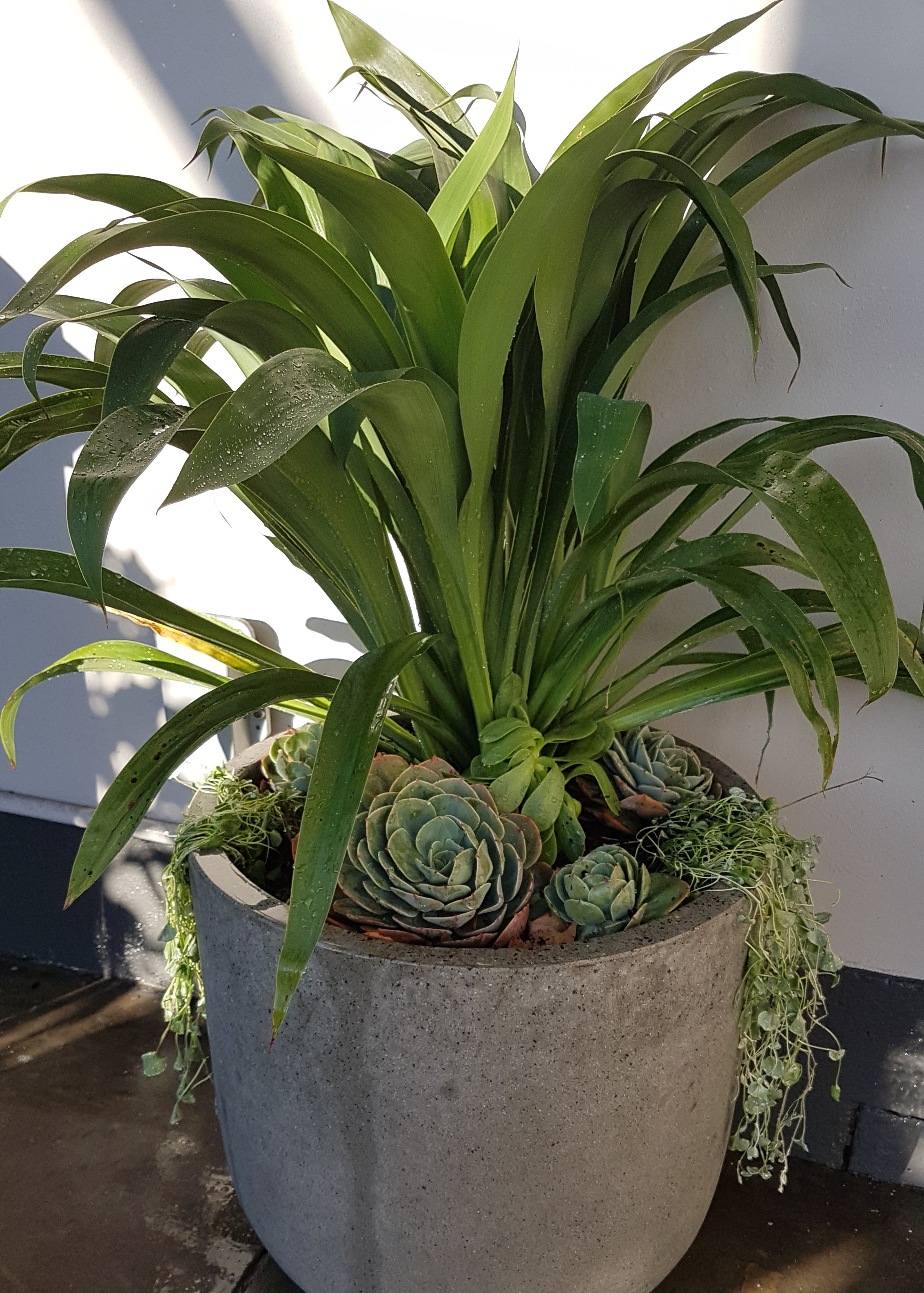 Potted plants, hardy potted plants, feature pots.