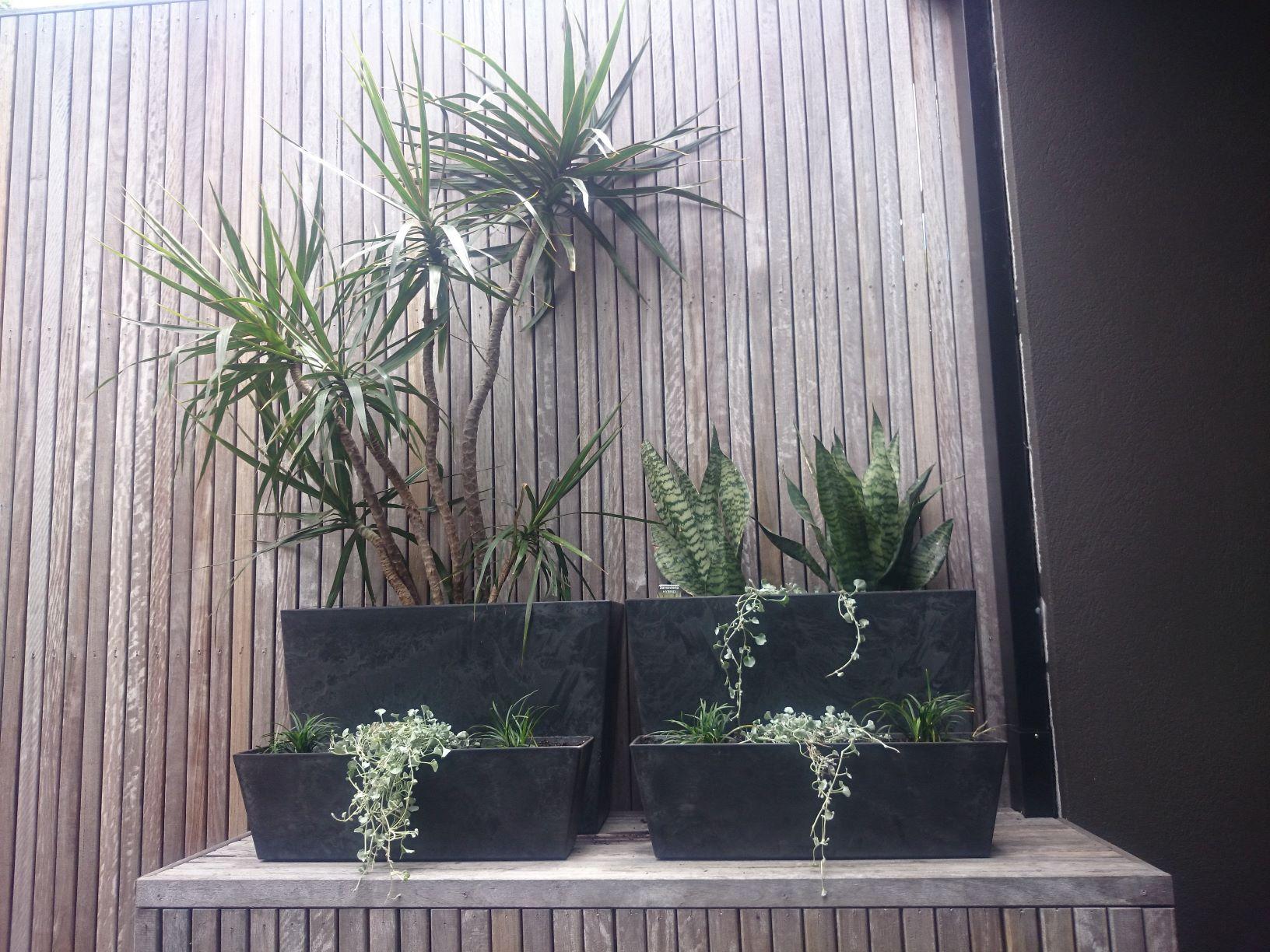 Rectangular pots, tough plants for pots, part shady plants for pots. Courtyard pots, roof top garden pots. space saving pots