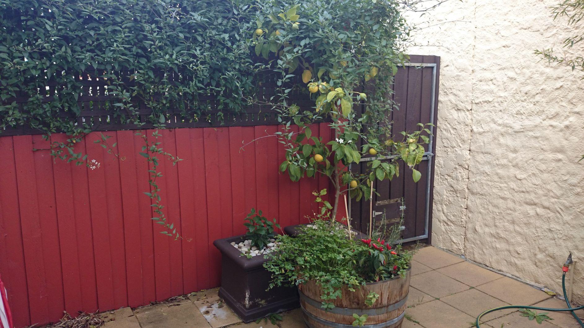 South Melbourne courtyard garden, Before photo uglyness