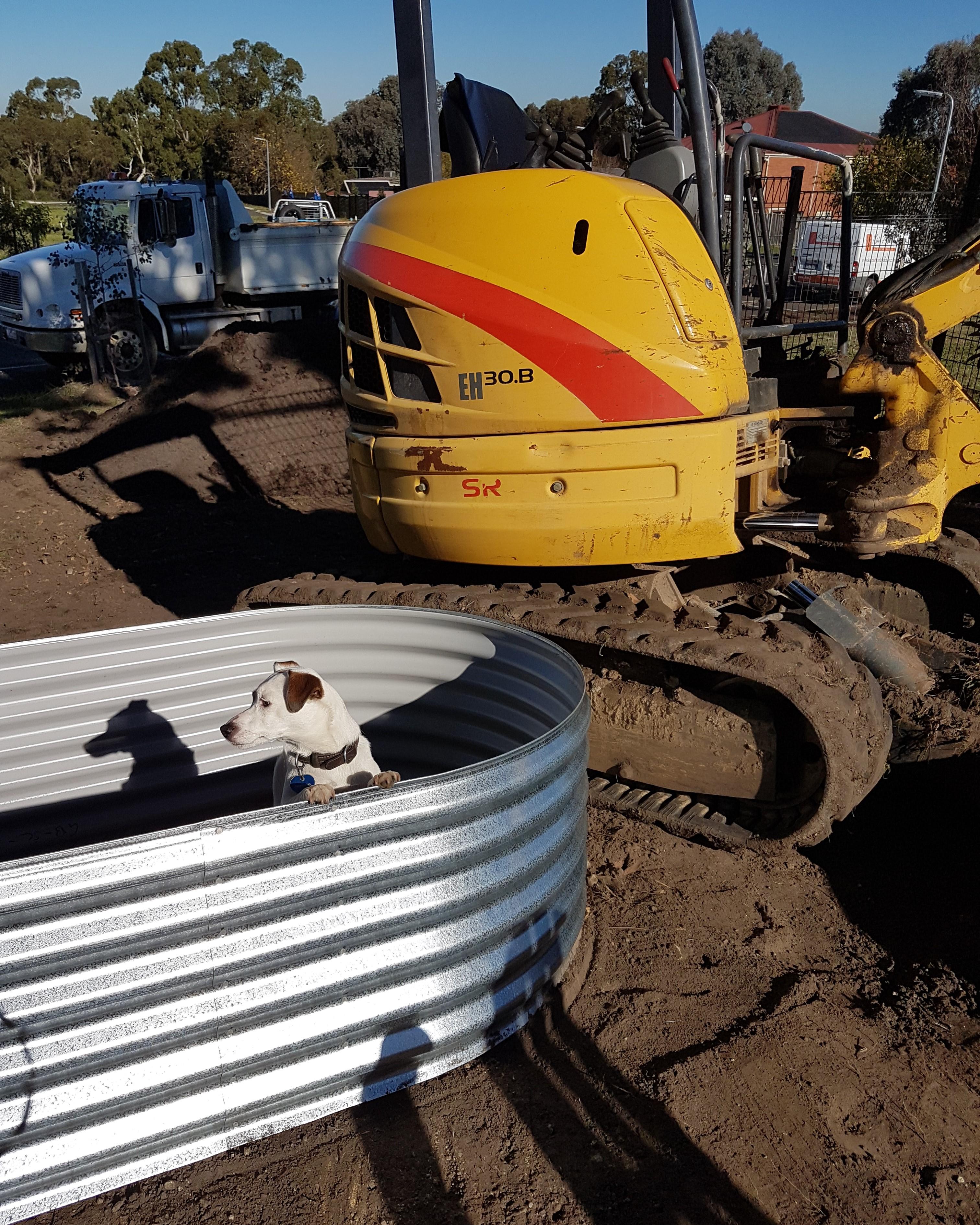 excurvator, dog, raised vegie bed, corigated iron vegie garden,